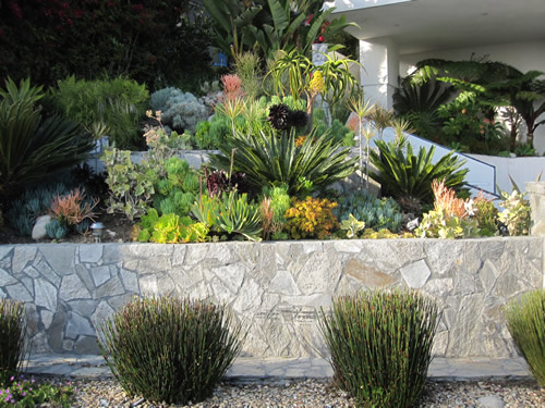 City of huntington beach california water conservation for Low water landscaping plants