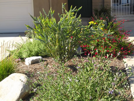 Climate appropriate plants creates a beautiful border between two properties.