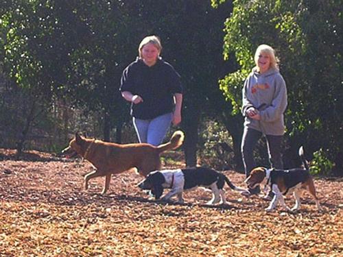 Hb Central Park Dog Park